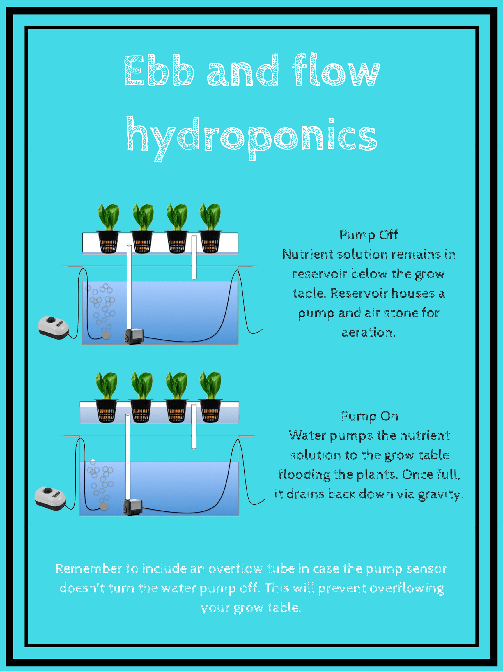 Hydroponic systems: What are they and how do they work